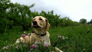 Tumblr, Blog, and Http: dailyblep:  Flowery blop