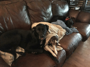 dailyblep:  Is a sleepy blop with the fam allowed?: dailyblep:  Is a sleepy blop with the fam allowed?