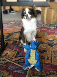 Tumblr, Blog, and Http: dailyblep:  This is my dragon blop