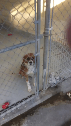 Dogs, Hello, and Tumblr: dailychrisevans: @ChrisEvans This is the moment we met. He was trying so hard to stay seated even though he desperately wanted to get out. I knew right away that he was coming home with me, so I took this video to always remember our first hello. Rescue dogs are the best dogs!! #NationalPetDay