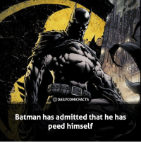Batman, Facts, and Memes: DAILYCOMIC FACTS  Batman has admitted that he has  peed himself It's Batman week! All week long I will be posting Batman facts, hope you guys enjoy! • dccomics detectivecomics comics dccomicheroes dccomicvillains hero villain heroes villains justiceleague unitethe7 dccomicstudios dccu dccomicfacts dailycomics comic comicfacts dailycomicfacts
