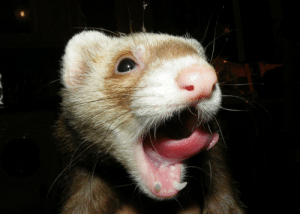 dailyferret:  DSCF2151 by Fiona: dailyferret:  DSCF2151 by Fiona