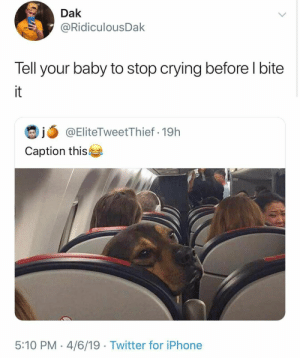 Animals, Crying, and Dogs: Dak  @RidiculousDak  Tell your baby to stop crying before l bite  it  @EliteTweetThief 19h  Caption this  5:10 PM 4/6/19 Twitter for iPhone Dog Memes Of The Day 32 Pics – Ep38 #dogs #dogmemes #lovelyanimalsworld - Lovely Animals World
