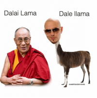 Dalai Lama, Dank Memes, and Lama: Dalai Lama  Dale llama  sweetkaratemoves Oh no