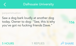 """Dog Today: Dalhousie University  panpamsituation  Saw a dog bark loudly at another dog  today. Owner to dog: """"See, this is why  you've got no fucking friends Dave.  156  5 HOURS  1 REPLIES  SHARE"""