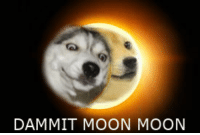 Dammit Moon Moon: DAMMIT MOON MOON Dammit Moon Moon
