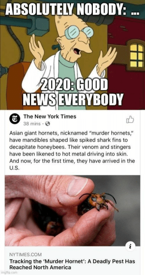 Damn 2020, are we ever going to catch a break? #Memes #MurderHornets #WTF #2020: Damn 2020, are we ever going to catch a break? #Memes #MurderHornets #WTF #2020