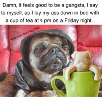 Have an awesome Friday night friends. Lots of pug hugs...😘😘😘🐾🐾🐾: Damn, it feels good to be a gangsta, l say  to myself, as I lay my ass down in bed with  a cup of tea at 9 pm on a Friday night...  estar  pug  the  chie Have an awesome Friday night friends. Lots of pug hugs...😘😘😘🐾🐾🐾