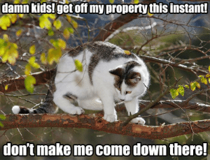omg-images:Grouchy neighbour: damn  kids!get  off  my  property  this  instant  dontmake me come down there omg-images:Grouchy neighbour