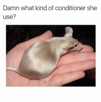Cute, Funny, and Memes: Damn what kind of conditioner she  use? 42 Cute Animal Memes That Never Stop Being Funny