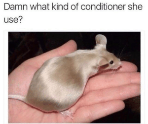 Dank, Asking, and 🤖: Damn what kind of conditioner she  use? Asking for a friend.