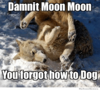 Moonmoon: Damnit Moon Moon  You forgot how Dog  We Know Memes
