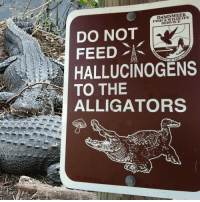me_irl: DAMNWEEK  FISH & WILDLIFE  SERVICE  DO NOT  ENT OF  HALLUCINOGENS  TO THE  ALLIGATORS me_irl