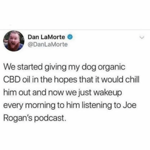 Chill, Twitter, and Dog: Dan LaMorte  DanLaMorte  We started giving my dog organic  CBD oil in the hopes that it would chill  him out and now we just wakeup  every morning to him listening to Joe  Rogan's podcast. Jamie pull that up (twitter: @DanLaMorte)
