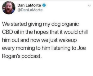 Chill, Super, and Dog: Dan LaMorte  @DanLaMorte  We started giving my dog organic  CBD oil in the hopes that it would chill  him out and now we just wakeup  every morning to him listening to Joe  Rogan's podcast Super chill now