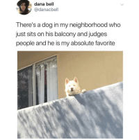 Funny, Good, and Boy: dana bell  @danacbell  There's a dog in my neighborhood who  just sits on his balcony and judges  people and he is my absolute favorite He's such a good boy😍 Via @thefunnyintrovert