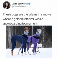 Dogs, Memes, and Golden Retriever: Dana Schwartz <  @DanaSchwartzzz  These dogs are the villains in a movie  where a golden retriever wins a  snowboarding tournament Post 1823: so booojeee