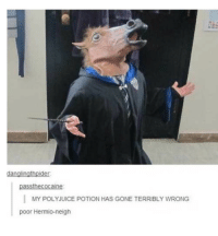 Harry Potter, Memes, and Potter: danalinathpider  in  MY POLYJUICE POTION HAS GONE TERRIBLY WRONG  poor Hermio-neigh Harry Potter memes 2