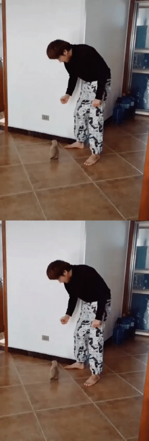 Dance battle with a pup (via): Dance battle with a pup (via)