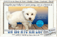 Being Alone, Andrew Bogut, and Apparently: DANCES for his Dinner & Treats Healthy  Young + Exuberant Playful  Craigslist pup Falkor is 3 years young, cute as a button el  To Save his Life  APPLY NOW or he  WILL DIE at the  Manhattan. NY ACC.  Please, don t  let them  kill me !!!  APPLY NOW to Save his Life  fa* ***** To Be KILLED 9/22/18 in NYC *****  DANCES for his Dinner & Treats + Healthy + Young + Exuberant + Playful Craigslist pup Falkor is 3 years young, cute as a button & ON the NYC Kill List. FOR A New Family To KNOW:: Falkor is described as a FRIENDLY, AFFECTIONATE, PLAYFUL & EXUBERANT pup. He will dance for dinner & loves smart bones, peanut butter, & yak bones for treats. Housebroken, well-behaved when left alone, he knows commands & enjoys slow walks around the block. He is a GOOD little boy who would do best in an adult-only new home. To Save his Life, APPLY NOW or he WILL DIE at the Manhattan, NY ACC but HURRY, he is out off time :(  Falkor 41121 Hello, my name is Falkor. My animal id is #41121.  I am a desexed male white dog at the Manhattan Animal Care Center.  The shelter thinks I am about 3 years 1 weeks old I only weigh 16 lbs.  For a New Family to Know:  Falkor is described as a friendly, affectionate, playful dog. He will dance for dinner and loves to eat treats. He will follow you around when you are home. He is indoors only and eats dry food Natures instinct and wet food beneful. His favorite treats are smart bones, peanut butter, and yak bones. He is very house trained and  never has accidents in the home. He prefers the cement and doesn't like grass. He is well behaved when left alone in the home and knows the commands sit, come, down, drop it and go get it. He gets slow walks on leash and pulls very hard when walked on leash. Falkor does not get walked off leash.  ****************************************** To FOSTER or ADOPT beautiful little Falkor, SPEAK UP NOW & Save a Life, APPLY with rescues OR message Must Love Dogs - Saving NYC Dogs I