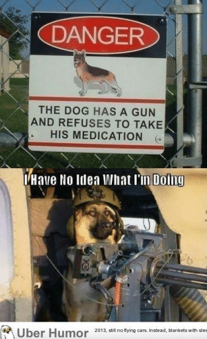 i have no idea what i'm doing.http://meme-rage.tumblr.com: DANGER  THE DOG HAS A GUN  AND REFUSES TO TAKE  HIS MEDICATION  THave No Idea What l'm Doing  Uber Humor 2013, still no flying cars. Instead, blankets with slee i have no idea what i'm doing.http://meme-rage.tumblr.com