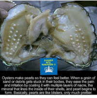 Bodies , Memes, and Layers: DANGER  WILL  ROBiNSON 2  Oysters make pearls so they can feel  better. When a grain of  sand or debris gets stuck in their bodies, they ease the pain  and irritation by coating it with multiple layers of nacre, the  mineral that lines the inside of their shells, and pearl begins to  form. Basically, pearls are like blisters, only much prettier.