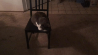 Cats, Love, and Tumblr: dangerous-tangerine: dark-magician-girl-meets-world:  daphnetrodon:  daphnetrodon:  The holidays take a dark turn as a crisis unfolds in our household  reblog to help him get off the chair, like to help him jump onto another surface  Sound on for this relatable content  cats are so stoopid i love them
