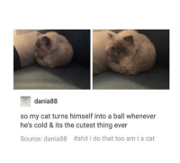 Shit, Cold, and Cat: dania88  so my cat turns himself into a ball whenever  he's cold & its the cutest thing ever  Source: dania88 #shit i do that too am i a cat Ball Cat