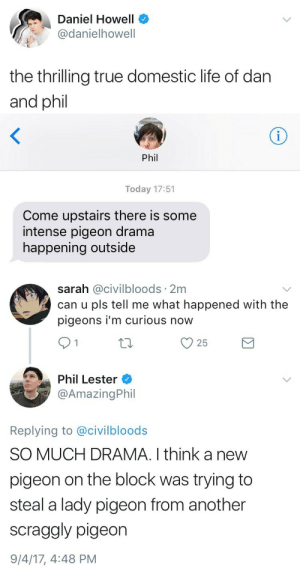 im curious: Daniel Howell  @danielhowell  the thrilling true domestic life of dan  and phil   Phil  Today 17:51  Come upstairs there is some  intense pigeon drama  happening outside   sarah @civilbloods 2m  can u pls tell me what happened with the  pigeons i'm curious now  Phi Lester  @AmazingPhil  Replying to @civilbloods  SO MUCH DRAMA. I think a new  pigeon on the block was trying to  steal a lady pigeon from another  scraggly pigeon  9/4/17, 4:48 PM
