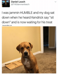 "Memes, Humble, and Jammin: Daniel Leach  @TH Edanmanleach  I was jammin HUMBLE and my dog sat  down when he heard Kendrick say ""sit  down"" and is now waiting for his treat  Featured will ent 😂😂😍"
