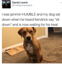 "Humble, Jammin, and Kendrick: Daniel Leach  @THEdanmanleach  Iwas jammin HUMBLE and my dog sat  down when he heard Kendrick say ""sit  down"" and is now waiting for his treat"