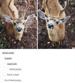 Animals, Deer, and Funny: daniel-noise  fugaazi:  agarocute:  forest puppy  that's a deer  its a forest puppy 42 Funny Dog Memes That'll Make Your Day! - Lovely Animals World