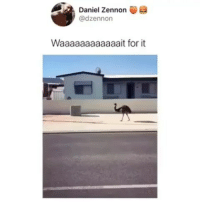Memes, Strong, and Running: Daniel Zennon  @dzennon  Waaaaaaaaaaaait for it Emus have three toes on each foot. Their legs are strong and built for running. They also use their legs for kicking predators when faced with danger is that even a emu iunno memes yyc
