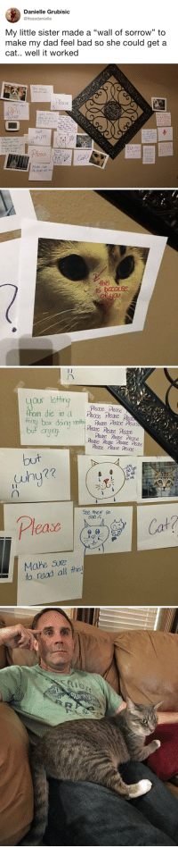 "tastefullyoffensive:  (via Itsssdanielle): Danielle Grubisic  @ltsssdanielle  My little sister made a ""wall of sorrow"" to  make my dad feel bad so she could get a  cat.. well it worked  35   Your Pillina  ininocent Ines  uhy why?  ease  yor i  Phase Por  but  Please, yous  nu nofe and naa  alore, and hver got  to haxe a family  or feni loved  re  ease !  ING INNOCa  LIVES  Cat?  Mahe Se  to read all廾is   Our lethit  them die in a Pease Ple  tiny box doin nth' Pease Pease,neas  but aryintg  Please Please  Peas ease Mease  Mease Nerse Please  Rease Reasc Pease Pease  Pease  e Pease  but  (uhy??  to me  See their so  Cat?  Mahe Sure  to read all ths tastefullyoffensive:  (via Itsssdanielle)"