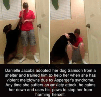 Aspergers: Danielle Jacobs adopted her dog Samson from a  shelter and trained him to help her when she has  violent meltdowns due to Asperger's syndrome.  Any time she suffers an anxiety attack, he calms  her down and uses his paws to stop her from  harming herself.