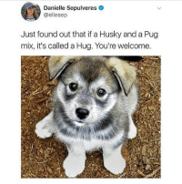 Memes, Butterfly, and Husky: Danielle Sepulveres  @ellesep  Just found out that if a Husky and a Pug  mix, it's called a Hug. You're welcome. Follow me @x__social_butterfly__x