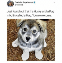 Cute, Funny, and Memes: Danielle Sepulveres  @ellesep  Just found out that if a Husky and a Pug  mix, it's called a Hug. You're welcome. @drsmashlove has cute memes