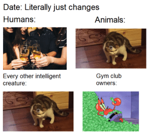 I just don't get them man: Date: Literally just changes  Humans:  Animals:  Gym club  Every other intelligent  creature:  owners: I just don't get them man
