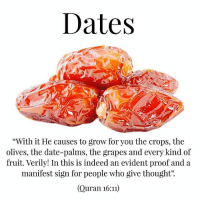 "Energy, Life, and Memes: Dates  ""With it He causes to grow for you the crops, the  olives, the date-palms, the grapes and every kind of  fruit. Verily! In this is indeed an evident proof and a  manifest sign for people who give thought"".  (Quran 16:)  95 Benefits of Dates . The benefits of dates include relief from constipation, intestinal disorders, heart problems, anemia, sexual dysfunctions, diarrhea, abdominal cancer, and many other conditions. Dates are also good for gaining weight. They are rich in several vitamins, minerals and fiber too. These delicious fruits contain oil, calcium, sulfur, iron, potassium, phosphorous, manganese, copper and magnesium which are all beneficial for health. Some health specialists have said that eating one day per day is necessary for a balanced and healthy diet. . According to a modern medical survey, it is now accepted that dates are useful in preventing abdominal cancer. Also, the nervous system can get a lot of help from consuming dates, since they have significant amounts of potassium. . Dates are one of the best sweet and versatile foods that can regulate the digestive process. It can significantly boost energy levels in people within half an hour of consuming it. The American Cancer Society recommends an intake of 20-35 grams of dietary fiber per day, which can be supplied through dates. It is also said that taking one date per a day will help you to maintain your eye health all your life. They are commonly known to be quite effective in guarding against the problem of night blindness. . Dates are a good source of various vitamins and minerals. Its also a good source of energy, sugar and fiber. Essential minerals such as calcium, iron, phosphorus, sodium, potassium, magnesium and zinc can be found in them. They also contain vitamins such as thiamin, riboflavin, niacin, folate, vitamin A and vitamin K. ."