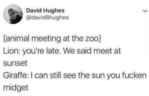 Animal Meeting by Nuolong MORE MEMES: David Hughes  @david8hughes  [animal meeting at the zoo]  Lion: you're late. We said meet at  sunset  Giraffe: I can still see the sun you fucken  midget Animal Meeting by Nuolong MORE MEMES