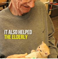 Memes, Kittens, and Wolf: David Wolfe.c  IT ALSO HELPED  THE ELDERLY  NIMAL CARE These elders in senior care helped take care of orphaned kittens and it was tremendously helpful - not even for just the kittens!
