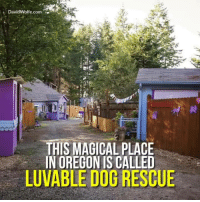 Memes, Magic, and Oregon: David Wolfe.com  THIS MAGICAL PLACE  IN OREGON IS CALLED  LUVABLE DOG RESCUE Luvable Dog Rescue! This Shelter Lets Dogs Live In Cabins Not Cages.  BECOME A FAN AT: https://www.facebook.com/luvabledogrescue/?fref=ts