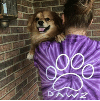 Thanks @tuckerthecavpom for the support in our Berry tie dye shirt order now at PawzShop.com to save the doggos 🐶🐾: D'AW Z Thanks @tuckerthecavpom for the support in our Berry tie dye shirt order now at PawzShop.com to save the doggos 🐶🐾