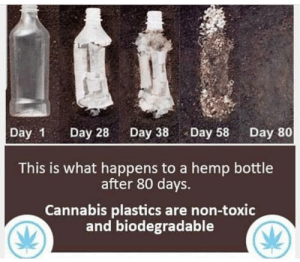 Cannabis: Day 1 Day 28Day 38Day 58 Day 80  This is what happens to a hemp bottle  after 80 days.  Cannabis plastics are non-toxic  and biodegradable