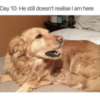 Fresh, Funny, and Memes: Day 10: He still doesn't realise I am here Funny Fresh and Fantastic Animal Memes to Get You Going - 8