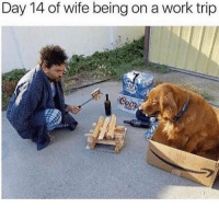 Memes, Work, and Wife: Day 14 of wife being on a work trip  BU About right! 😂
