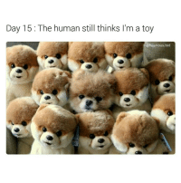 @hilarious.ted is my favorite animal meme account on IG. check him out 🐶🐵🐱🦁🐏: Day 15 The human still thinks I'm a toy  @hilarious ted @hilarious.ted is my favorite animal meme account on IG. check him out 🐶🐵🐱🦁🐏