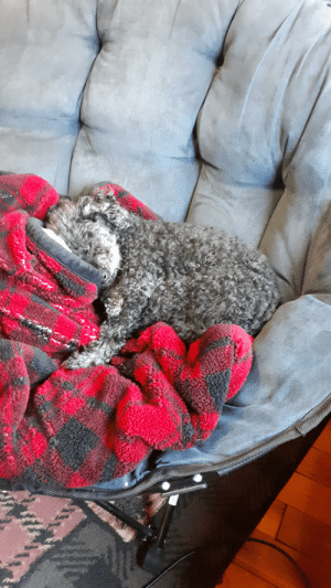 Day 17 of quarentine- my family's 13 year old puppy won't leave my side while I'm working from home.: Day 17 of quarentine- my family's 13 year old puppy won't leave my side while I'm working from home.