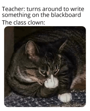 Day 2 of posting random cat memes.: Day 2 of posting random cat memes.