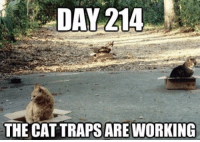 DAY 214  THE CAT TRAPS ARE WORKING https://thedailykitty.com/meme/cred-auto-draft-8ee333714d80a1dc0ff7c07ce83f5d96-3/